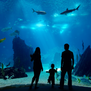 Picture of people at an aquarium